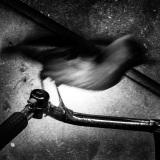 Wegwezen vogel met fiets